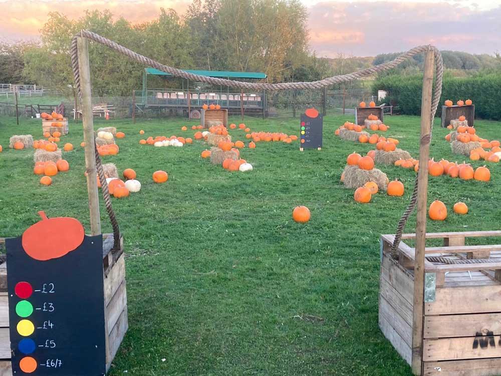 Pick a Pumpkin at Topbarn Farm Shop